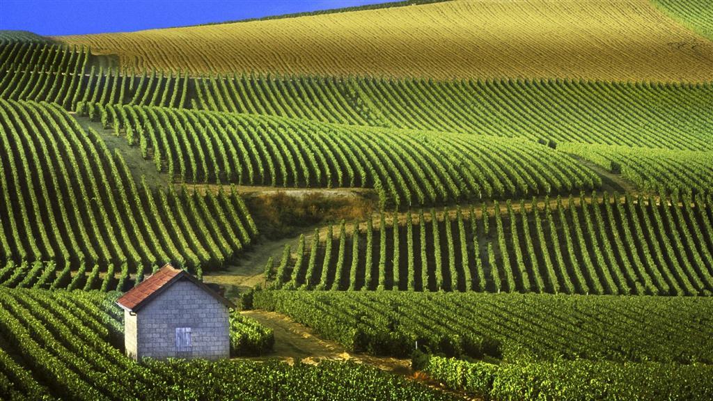 venta de vino a granel: